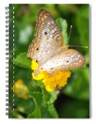 Butterflywith Dots Spiral Notebook