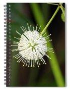Button Bush Spiral Notebook