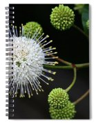 Buttonbush Flowers Spiral Notebook