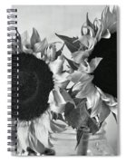 Bw Sunflowers #002 Spiral Notebook