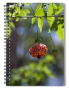 Red Papery Covering Over Its Fruit Spiral Notebook