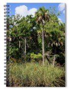 Cabbage Palms Along The Cotee River Spiral Notebook