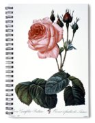 Cabbage Rose Spiral Notebook