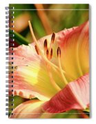 Cabbage White Butterfly On Day Lily Spiral Notebook