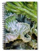 Cactus Curves Spiral Notebook