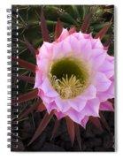 Cactus Flower Arizona 1 Spiral Notebook