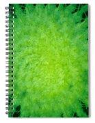 Cactus Nr4 Spiral Notebook