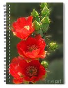 Cactus Red Beauty Spiral Notebook