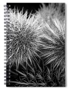 Cactus Spines Spiral Notebook