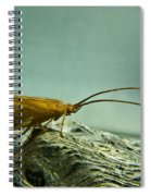 Caddisfly Spiral Notebook