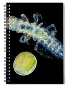 Caddisfly Larvae And Egg, Lm Spiral Notebook