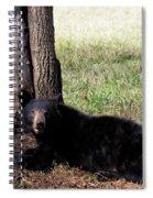 Cades Cove Bear Spiral Notebook
