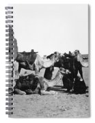 Cairo: Group Of Camels Spiral Notebook