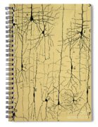 Cajal Drawing Of Microscopic Structure Of The Brain 1904 Spiral Notebook