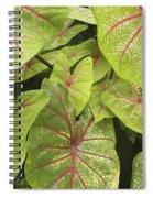 Caladium Leaves Spiral Notebook