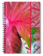 Caladium Red Trio Spiral Notebook