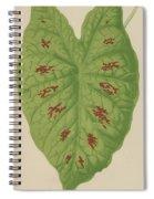 Caladium Verschaffelti Spiral Notebook