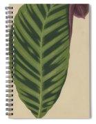 Calathea Zebrina, Maranta Zebrina Spiral Notebook