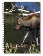 Calf Moose Spiral Notebook