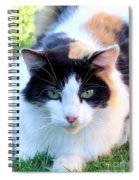 Calico 2 Spiral Notebook