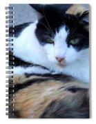 Calico 3 Spiral Notebook