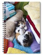 Calico Kitten On Towels Spiral Notebook