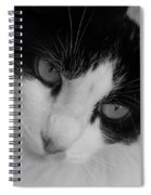 Calico Spiral Notebook