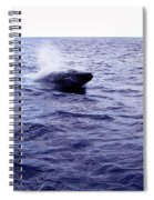 California Blue Whale Spiral Notebook