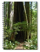 California Redwood Trees Forest Art Spiral Notebook