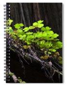 California Redwoods 4 Spiral Notebook