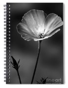 Californian Poppy Spiral Notebook
