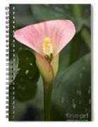 Calla In The Mist Spiral Notebook