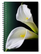 Calla Lily Green Black Spiral Notebook
