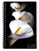 Calla Trio Spiral Notebook