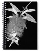 Callistemon Beauty 1 Spiral Notebook