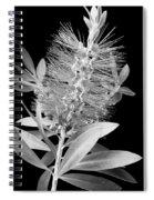 Callistemon Beauty 4 Spiral Notebook