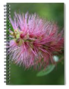 Callistemon Viminalis Taree Pink Weeping Bottlebrush Flowering Trees Of Hawaii Spiral Notebook