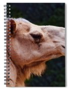 Camel Spiral Notebook