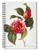 Camellia, 1833 Spiral Notebook