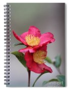 Camellia Sasanqua Yuletide 1 Spiral Notebook