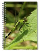 Cameo Green Dragonfly Spiral Notebook