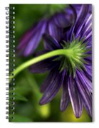 Camera Shy Daisy Spiral Notebook