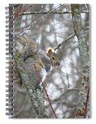 Camera Shy Grey Squirrel Spiral Notebook
