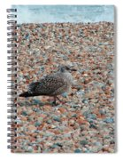 Camo Chick Spiral Notebook