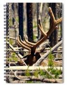 Camouflaged Spiral Notebook