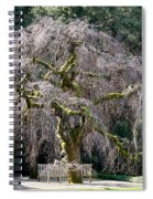 Camperdown Elm Tree Spiral Notebook