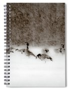 Canada Geese Feeding In Winter Spiral Notebook