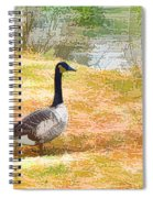 Canadian Geese 6 Spiral Notebook