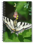 Canadian Tiger Swallowtail Butterfly-underside Spiral Notebook