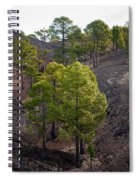 Canary Pines Nr 4 Spiral Notebook